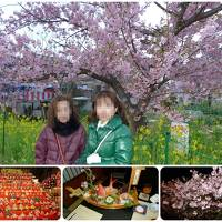 桐のかほり咲楽で河津桜 1日目