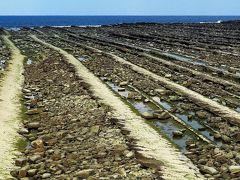 宮崎-1 青島 隆起海床と奇形波蝕痕 ☆「鬼の洗濯板」は天然記念物