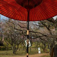 横浜花巡り 保土ヶ谷公園梅林、三ッ池公園