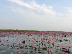 タイ専科⑭ タレー・ブア・デーン 紅い睡蓮の海 クンパワピー
