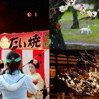 京都市内の2月の風物詩