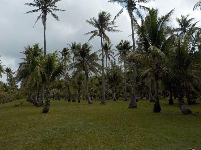 ロタにきて2日目はホテルのツアーで島内観光です!!<br /><br />午前中は南部の観光。