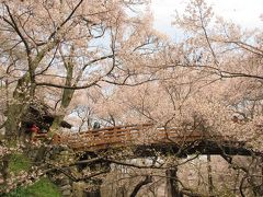 桜を愛でる旅 in 長野