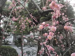 世田谷 巨木と寺めぐり