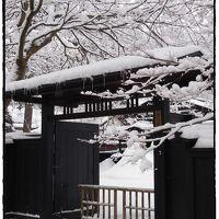 思いっきり雪景色を見た~い!!と諦めきれずに・・・角館へ ★ついに・・・雪の桜が満開!そしてモノクロームの雪景色★