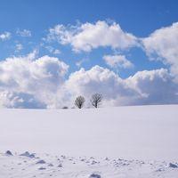 冬の美瑛を駆け巡る