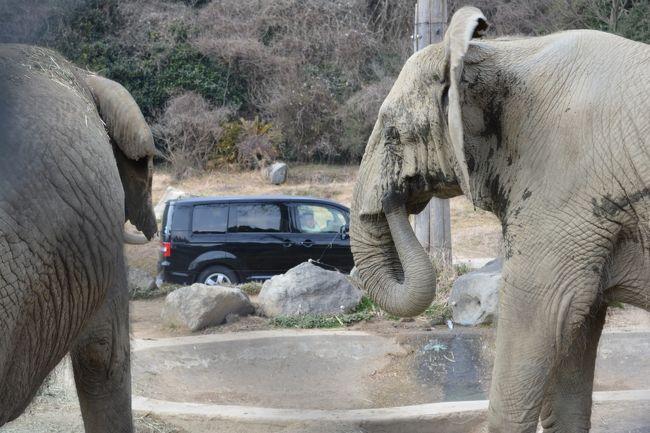 姫路セントラルパークに行ってきました。<br />初めての訪問でしたが、サファリでは動物が意外に近くで見れてビックリでした!!