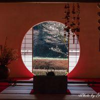 早春の鎌倉散歩