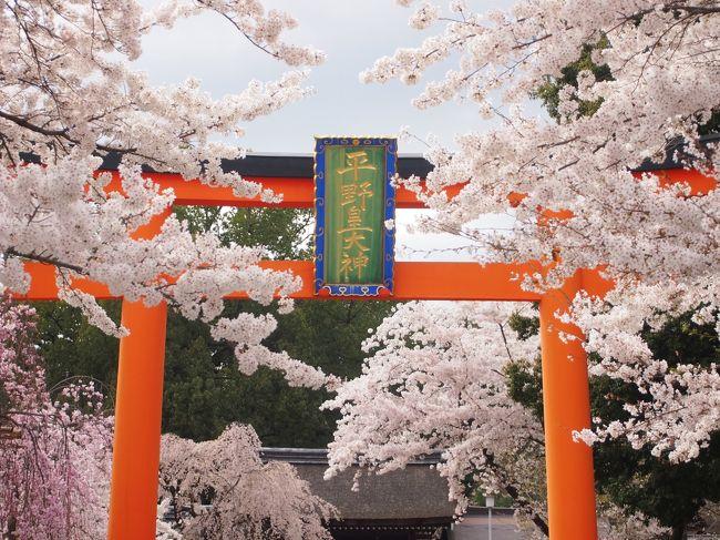 桜咲く京都に行ってきました。ちょうどソメイヨシノの満開時期です!