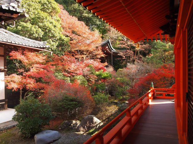 今年は京都の紅葉を見に行くことが出来ました!しかし、今年は秋→冬への移り変わりの時期がとても暖かく、事前に紅葉情報をチェックしていてもなんだかイマイチ…?(・・;)でもせっかく時間が出来たし、いつものように在来線を乗り継ぎ京都へ。今回は京都駅の一駅手前の山科駅で下車です。<br /><br /><br />◆秋の京都2015 一人旅 その2 ~曼殊院門跡・圓光寺・詩仙堂・青蓮院門跡~<br />https://4travel.jp/travelogue/11177478<br /><br /><br />過去の秋の京都<br />◆秋の京都2013 一人旅その2 天龍寺、渡月橋、常寂光寺、宝厳院<br />https://4travel.jp/travelogue/11110419<br /><br />◆秋の京都2013 一人旅その1 永観堂、南禅寺<br />https://4travel.jp/travelogue/11110418<br /><br />