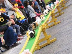 久しぶりに自転車でのんびり智光山公園へ(後編)こども動物園:レッサーパンダはいないけど、日本最高齢のブラジルバクのペアに会いたくて~モルモットの橋渡りは日本最長21m!