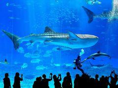 沖縄・城跡巡りと美ら海水族館&米軍基地