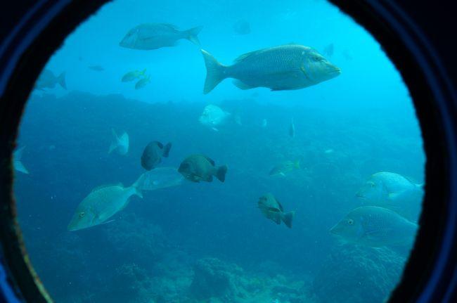 昨年11月に行った沖縄の暖かさが忘れられなくて来訪♪<br />・・・が、2月は特に暖かいわけではなかった笑<br /><br />1歳になり、よちよち歩くようになったお嬢と一緒に♪<br /><br />前回は首里城,美ら海水族館などの定番スポットに行ったので,<br />今回は行ったことないところに行こう!ということで..<br /><br />グリーンフィールドでステーキ♪<br />ブセナ海中公園<br />なかま食堂でソ−キそば<br />三矢本舗でサ−タ−アンダギ−<br />ビオスの丘で鑑賞舟&amp;芝生でのんびり<br />座喜味城跡<br />やっけぶーすでパンケーキ<br />美浜アメリカンビレッジ<br />ベアーズでガーリックシュリンプ<br />あしびなーアウトレット<br /><br />に行ってきました〜<br /><br />☆忘れたもの<br />ETCカード<br />エコバック<br /><br />☆持って行けばよかったもの<br />洗剤