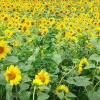 仔猫といっしょ計画(北海道旅行2014 4日目 ニセコ、室蘭編)