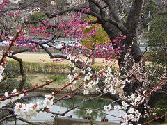 気になるイバラキ、偕楽園へ梅を見に行ってきました
