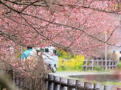 春の桜散歩①~一の堰ハラネ桜まつり~