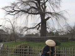 歩き疲れた京都観光(錦市場・祇園・八坂神社・円山公園・知恩院・青蓮院・哲学の道)