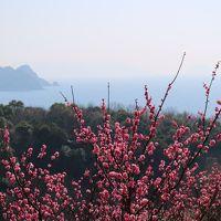 旬の牡蠣と海の見える梅林(光市 冠山総合公園)