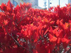 2015秋、四柱神社と松本城周辺(3/3):11月5日(2):松本旧市街