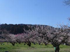 越生の梅林で日本の風景を堪能する