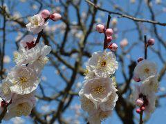 梅に誘われ太宰府へ:太宰府天満宮と竃門神社をぶらり