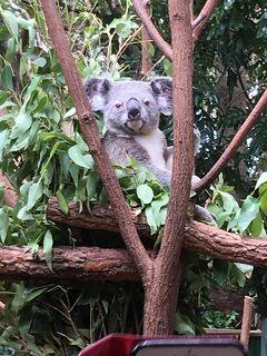 家族3人でオーストラリア旅行2週間 9日目(Currumbin Wildlife)