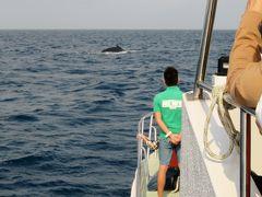 2016春、沖縄旅行(3):3月18日(1):那覇で泊まったホテル、慶良間諸島、野生鯨のホエール・ウォッチング