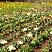 ダマスクの風に四季の花々を見に  ※鹿児島県鹿屋市