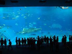 26年ぶりの沖縄 美ら海水族館 (2)