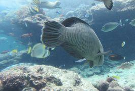 2016春、沖縄旅行(9):3月18日(7):海洋博公園、沖縄美ら海(ちゅらうみ)水族館、チョウチョウウオ、ヤッコエイ、ヤイトハタ、