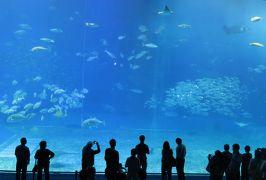 2016春、沖縄旅行(12):3月18日(10):海洋博公園、沖縄美ら海(ちゅらうみ)水族館、大水槽、ジンベエザメ、ナンヨウマンタ