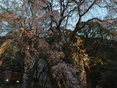 東京 お花見紀行