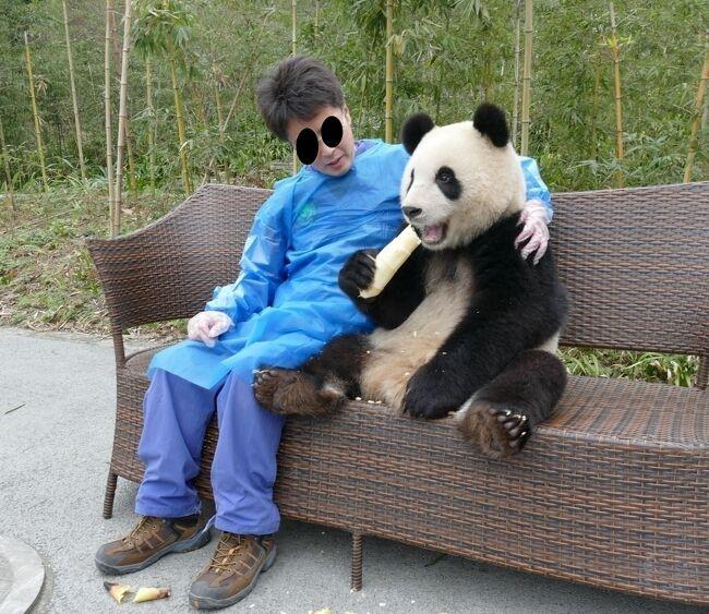 ついにパンダ捕獲! 念願のパンダ抱っこができました。場所は中国四川省 の中国保護大熊猫研究中心 都江堰基地「熊猫楽園」。<br />パンダ抱っこは20秒で1800元ですが、閑散期で、だっこ希望者は私一人!<br />撮ってくれた写真は約100枚で時間は4分程でした。<br />とにかくパンダはメチャクチャ可愛いです。<br />本編最後に、パンダ抱っこ、ボランティアの申込方法をに記載しました。<br /><br />★下記アメブロに、地図、地下鉄やシャトルバスの切符購入方法、乗り方などを写真付きで詳しい情報を載せています。是非ご覧ください。<br />https://ameblo.jp/suikapanda-china/entry-12455952871.html<br /><br />★「パンダ基地への行き方」のまとめ<br />https://4travel.jp/travelogue/11291821<br /><br />3/2~3【成都パンダ基地】<br />https://4travel.jp/travelogue/11115637<br />3/4【念願パンダボランティア!とUFO撮影も】<br />https://4travel.jp/travelogue/11115739<br />●3/4【ついにパンダ捕獲!念願のパンダ抱っこ!】<br />https://4travel.jp/travelogue/11115816<br />3/5【妹子に会いに熊猫谷に。。】<br />https://4travel.jp/travelogue/11115971<br />3/6【五一棚登山で野生パンダの足跡発見!】<br />https://4travel.jp/travelogue/11116072<br />3/7~8【耿達郷新基地に行ってみると…】<br />https://4travel.jp/travelogue/11116264<br />3/9~11【水磨鎮→成都→(成昆鉄道)→昆明】<br />https://4travel.jp/travelogue/11116318<br />3/12~13【元陽→老孟(少数民族の日曜市)】<br />https://4travel.jp/travelogue/11116385<br />3/14【世界遺産(棚田)を見ずに元陽→河口…、が普者黒へ行くことに!】<br />https://4travel.jp/travelogue/11116580<br />3/15【普者黒の朝陽】<br />https://4travel.jp/travelogue/11116787<br />3/15【普者黒(周辺散策と湖遊覧)】<br />https://4travel.jp/travelogue/11116903<br />3/16【中国出国に向けて普者黒から河口へ…リミットは今夜23時】<br />https://4travel.jp/travelogue/11117102<br />3/17~18【Sapaから昆明に戻る(中国再入国)】<br />https://4travel.jp/travelogue/11117739<br />3/19~20【雲南省東川紅土地から昆明、そしてベトナム再入国のため再び河口へ】<br />https://4travel.jp/travelogue/11117850<br />3/21【ベトナム再入国→ハノイへ】<br />https://4travel.jp/travelogue/11118412<br />3/22~26【ハノイ街歩き→帰国】<br />https://4travel.jp/travelogue/11118666