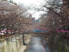目黒川の桜はまだ咲いていません