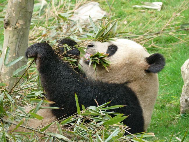 妹子に会いに熊猫谷にも行ってみましたが…