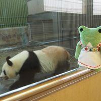 けろ子ZOOへ行く(2)神戸市立王子動物園
