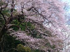 お散歩道・北本自然観察公園 〔野鳥観察・梅・桜〕  in埼玉県・北本