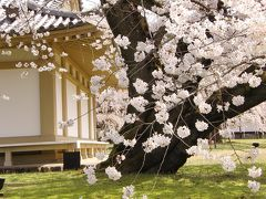 京都('13 花見)