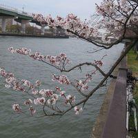 大阪城桃園と桜開花状況&2週連続、天保山岸壁に豪華客船寄港