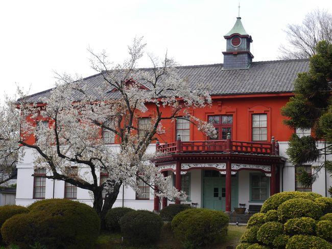 東京駒込・染井吉野の里~六義園~小石川植物園~ミシュラン☆ラーメン店「蔦」を訪れて