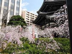桜満開♪京都旅