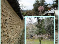 桜には早かった奈良 1 3月末の桜は、これくらいでした^^;