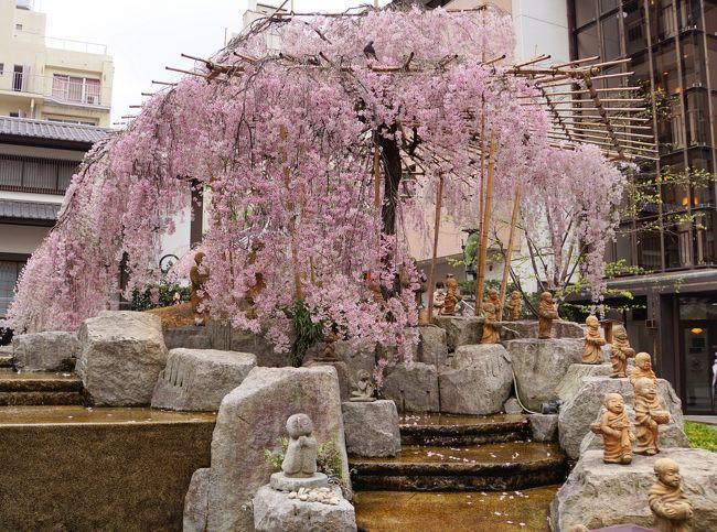 桜の開花宣言が各地で出て春本番になりました。<br /><br />京都御苑はもう見頃だから、写真撮りに行こうと誘われ、二つ返事で出かけてきました。<br />待ち合わせまで少し時間があったので、どこか近くで楽しめるところはないか探してみたところ・・・六角堂には可愛いお地蔵さん&羅漢さんがいらっしゃることを知りました。<br /><br />桜も咲いているようなので、短時間でしたが訪れてみました。