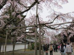 2016春、京都の桜巡り(1/13):3月30日(1):醍醐寺(1):名古屋駅からバスで京都へ、醍醐寺境内の枝垂れ桜、唐門