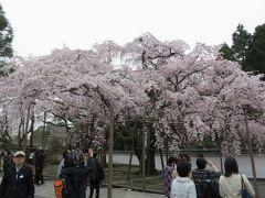 2016春、京都の桜巡り(2/13):3月30日(2):醍醐寺(2):境内の枝垂れ桜、三宝院、大玄関、表書院、唐門、庭園