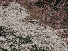 2016春、京都の桜巡り(4/13):3月30日(4):醍醐寺(4):大玄関、庫裏、宗務本庁、道標、茶席、枝垂れ桜