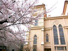 いまだ残る、桜の花を求めて。