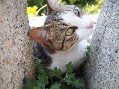 広島・鞆の浦。海と猫達と懐かしい風景を撮ってきました
