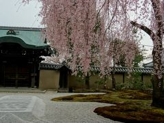 大人の遠足Part2!京都は清水寺と高台寺へ。少し早い花見を大好きな京都ではんなりと…。