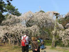 2016春、京都の桜巡り(6/13):3月30日(6):京都御所と御苑(1):京都御所到着、歩いて御苑へ、近衛邸跡の枝垂れ桜